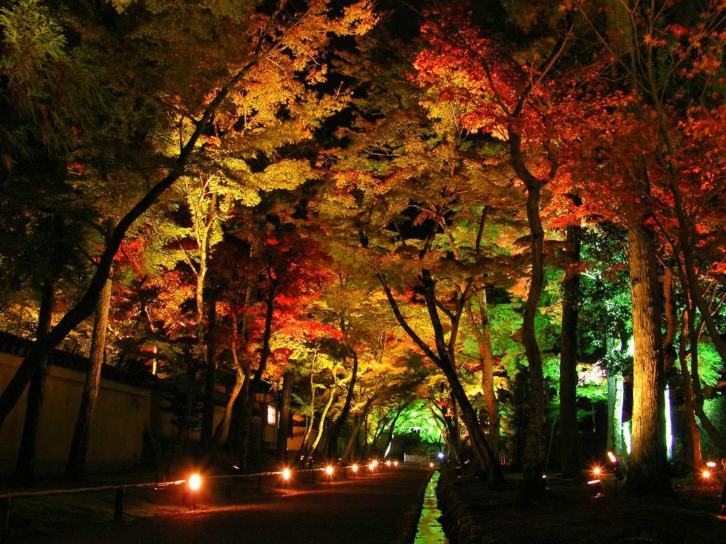 نورپردازی درختان با ال ای دی رنگی