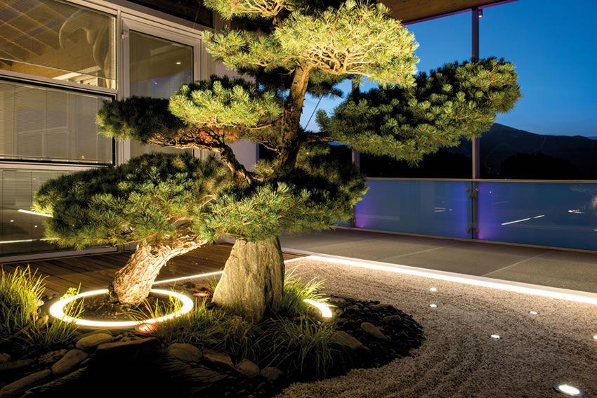 نورپردازی تاکیدی بر درختان